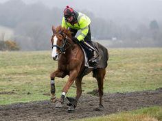 Sire De Grugy working at home.