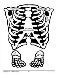 printable skeleton template in 8 colours primary worksheets pinterest 8 skeletons and. Black Bedroom Furniture Sets. Home Design Ideas