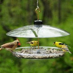 Covered Platform Feeder.  Birds that use this feeder: Cardinals, Chickadees, Finches, Flickers, Goldfinches, Grackles, Grosbeaks, Jays, Juncos, Kinglets, Nuthatches, Redpolls, Siskins, Sparrows, Starlings, Titmice, Towhees, Woodpeckers and Wrens #birdfeeder #birdwatching #birdseed