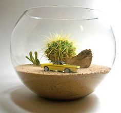 A cactus is a superb means to bring in a all-natural element to your house and workplace. The flowers of several succulents and cactus are clearly, their crowning glory. Cactus can be cute decor ideas for your room. Cactus Terrarium, Fairy Terrarium, Terrarium Containers, Snake Terrarium, Terrarium Centerpiece, Hanging Terrarium, Centerpiece Wedding, Glass Terrarium, Indoor Cactus