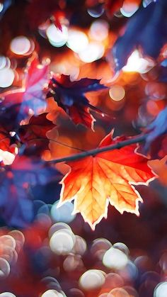 #Autumn dreaming.  :)