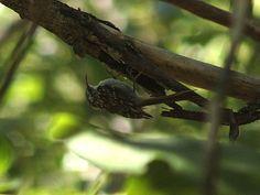 Raspinell | Endless Wildlife