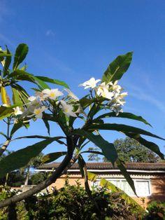Flores brancas e sua beleza à luz do Sol!