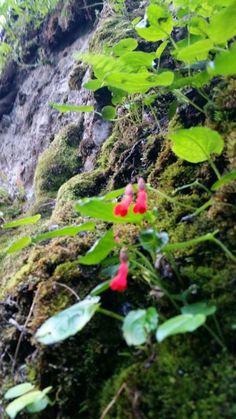 Flor de la cascada