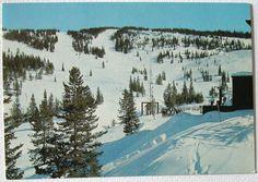 Postcard Mid Vail Area #4 Chairlift Swingsville Ski Run Vail Mountain, CO
