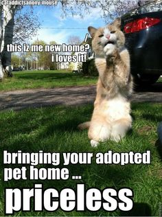 Bringing your adopted pet home.....priceless