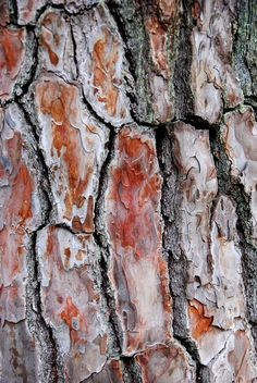 Tokoji Temple, Hagi - Tree Bark by GlobalCitizen01, via Flickr