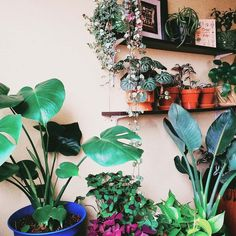 A community focused on the discussion, care, and well-being of houseplants! Room With Plants, Plant Therapy, Plant Shelves, My Secret Garden, Shelf Ideas, Plant Decor, Patio Ideas, Houseplants, Indoor Plants
