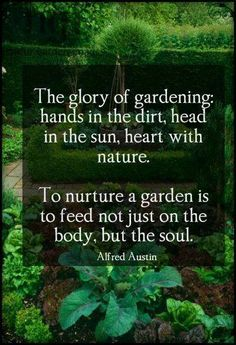 "The glory of gardening: hands in the dirt, head in the sun, heart with nature. To nurture a garden is to feed not just on the body, but the soul."" ~ Alfred Austin http://www.naturalnews.com/gardening.html"