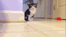 Låt katten göra jobbet – att vårstäda har aldrig varit roligare - Sköna hem