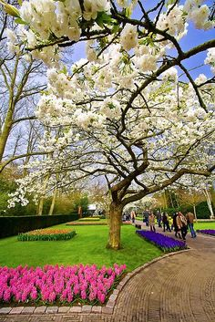 White Tree - Keukenhof – The Garden of Europe - Netherlands Tourism Beautiful Nature Wallpaper, Beautiful Landscapes, Most Beautiful Gardens, Beautiful Flowers, Netherlands Tourism, Parks, Spring Landscape, Public Garden, Nature Tree