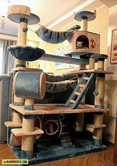 An awesome cat tree to keep the girls occupied while mom is taking care of PG.