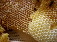 Have you ever eaten honeycomb? Read about my experience trying it on Whole Foods Living!