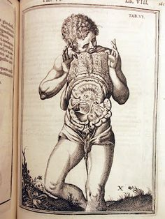 From Adriaan van de Spiegel's De Humani Corporis Fabrica Libri Decem (Venice, 1627). The images of the book were originally drawn by Odoardo Fialetti (1573–1638), a student of Titian, and engraved on copper plates by Francesco Valesio. http://www.nlm.nih.gov/exhibition/historicalanatomies/casseri1_home.html http://www.christies.com/LotFinder/lot_details.aspx?intObjectID=4959884