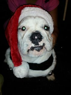 This is Rumple he's in a Santa Paws contest please follow the link to vote for him please. https://m.facebook.com/apps/offerpop?fb_source=timeline_uri=http%3A%2F%2Ftylerdogphotography.offerpop.com%2Ffb%2Fcanvas%2Ftab%2F217756821641312%2F254553244581393%2F253805%2Fentry%2F809964=profile=17