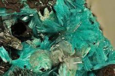 Aurichalcite, Ojuela Mine, Mapimi, Durango, Mexico.  Acicular blue-green crystals with Hemimorphite. Fov 9,0 mm. Collection: Lithothek der Münchener Micromounter. Copyright: Hannes Osterhammer