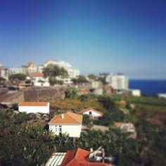 Die Bananenplantagen beginnen genau vor dem Hotel Golden Residence in Funchal