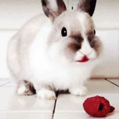 21 Reasons Why Bunnies Are Actually The Best Pets