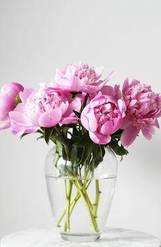 peonies in vase Piones Flowers, Flowers Nature, My Flower, Flower Vases, Planting Flowers, Beautiful Flowers, Flowers Garden, Peonies Centerpiece, Tropical Flowers