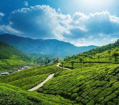 Munnar Kerala : The Perfect Summer Getaway For 2019 Cool Ideas, Kerala Backwaters, Kerala India, South India, Garden Angels, Exotic Beaches, India Culture, Kerala Tourism, Munnar