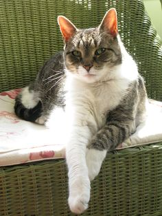 Gracie relaxing in the sun - beloved friend of Brigitte.  She is dearly missed.  2012