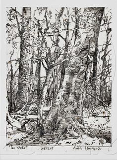 Tree Drawing - Martin Stankewitz