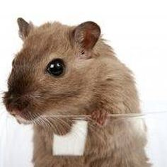 Rats, mice, and people have never been a winning combination. as these rodents always seem to be where we want them the very least. If the idea of rats and mice in your home is. Diy Pest Control, Pest Control Services, Bug Control, Mice Control, Weed Control, Getting Rid Of Rats, Mice Repellent, Insect Repellent, Mouse Traps