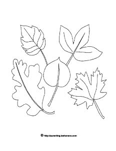 Fall Leaves Line Drawing