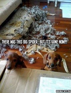 Mommy We Kill Ze Spider