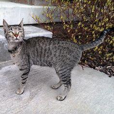 Adopt A Kitten Salt Lake City