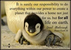 It is surely our responsibility to do everything within our power to create a planet that provides a home not just for us, but for ALL life on earth #Attenborough #PlanetEarth #earth #nature #conservation #responsibility #animals #penguin