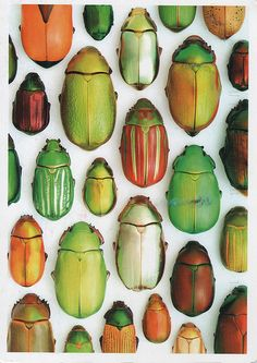 beetles!  I see a few in the painting!