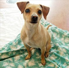 Judith is a happy girl waiting to find her forever family