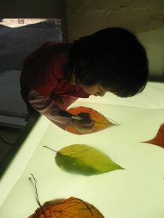 Tracing on light table - providing translucent paper and items underneath. On the light table, children are able to see more details on the objects. Reggio Classroom, Preschool Classroom, Teaching Kindergarten, Autumn Activities, Preschool Activities, Reggio Children, Reggio Emilia Approach, Overhead Projector, Tree Study