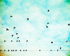 i love when tons of birds gather on a wire...don't ask me why. i feel like they are congregating and scheming a plan.