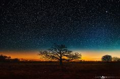 """""""October Tree"""" by Matt Anderson - Bright starry night on an alone oak upon the Wisconsin prairie. In the distance the horizon has an amber October glow casting contrasting shapes of the mighty tree. I love this time of year... I got up in the wee morning hours to find this spot."""