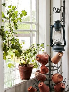 "...reminds me of our last year's sweet potato plant, ""Jack"" he grew all around our kitchen and we had to tie and pin him to the top of the cabinets!"