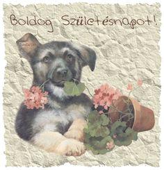 pandás szülinapi képeslap Boldog születésnapot képek   Google keresés | Szülinap | Pinterest  pandás szülinapi képeslap