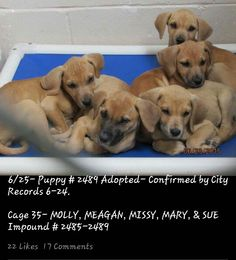 Due out MONDAY (6-29); needs out of the bldg first thing TUESDAY MORNING (6-30) ▪ No. 575-624-6722 Roswell Animal Control 705 E. McGaffey, Roswell, NM 88201▪ ✔ MOLLY/MEGAN/MISSY/MARY ▪ 2 Months Old *PUPIES* ▪ Blue Lacy X ▪ Female ▪ Tan ▪ Cage #35 | Impound #'s 2485-2488 ▪ Intake 6-22-15 | Due Out 6-29-15 LINK: https://m.facebook.com/RoswellUrgentAnimalsAtAnimalControl/photos/pb.176246809209991.-2207520000.1435319371./465403043627698/?type=1&source=42 ▪ MAIN PAGE LINK…