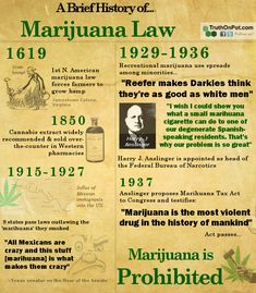 """this infographic misses a few key facts; such as the oil companies rebellion against hemp and the use of the term """"marihuana"""" to trick congress - they didn't know it was the same as cannabis and hemp. Ganja, Weed Facts, Marijuana Recipes, Endocannabinoid System, Smoking Weed, Medical Marijuana, Weed, Herbs, Weed Art"""