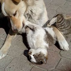 ЛЕТИЦИА @laetitia_3_4_92  as dog and cats