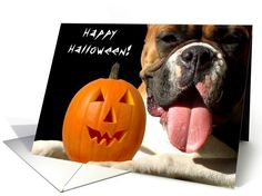 Happy Halloween Boxer dog card  #halloween #boxer #dog #card #cards #pumpkins #boxers
