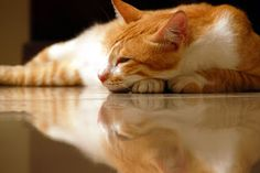 Make Your Own Frugal (DIY) Pergo Laminate Floor Cleaner