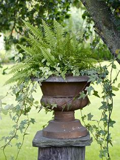 Thrilling About Container Gardening Ideas. Amazing All About Container Gardening Ideas. Garden Urns, Garden Planters, Porch Planter, Fern Planters, Potted Ferns, Potted Flowers, Porch Garden, Fresh Flowers, Flower Pots