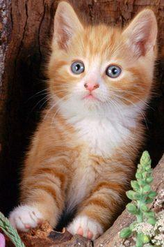 Gato... love