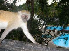 Diani Beach, Kenya, Kangaroo, Animals, Animais, Animales, Animaux, Animal, Dieren