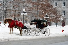 i'd love to ride in that horse-drawn carriage dashing through the snow. that is, if i had an electric blanket!