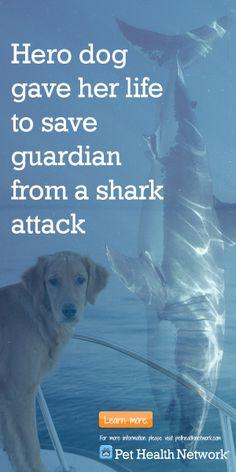 #herodog #sharkattack #australia  #pethealthnetwork