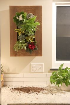 Wall planter (Grovert) - could use this in the kitchen for herbs!