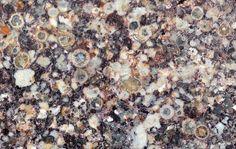 Jeerinah layer spherule rich rock, Australia Meteorite Imaging   Meteorite Times Magazine